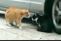 两只为情所困对话中的猫咪 瞄了个咪的!