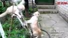【绝对经典】史诗级别的猫咪打斗,一击必杀!当心笑翻