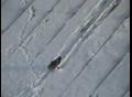 实拍超搞笑乌鸦:愚蠢的人类看好了,爷向你们演示如何在屋顶滑雪!
