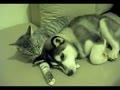 连猫都给狗梳头了~你还单身吗 ?
