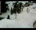 搞笑动物 初见下雪的企鹅疯狂热舞