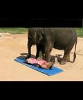 会按摩的小象 太可爱了~~~