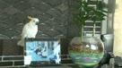 逆天!惊人的鹦鹉唱《江南Style》