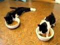 夏日炎炎猫咪享受冰球大餐