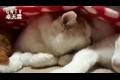 【雷州 霖 精选 】猫