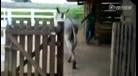 驴和马交配
