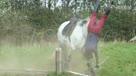 关于马的可悲视频