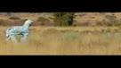 实拍两小伙假扮斑马遭群狮围攻惊险逃生