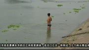 """【拍客】武汉汉江浮萍泛滥变""""草原"""" 泳者戏水又踏青"""