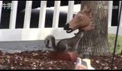 恶作剧又一桩马头喂食器让松鼠钻进去瞬间猎奇