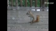 10段很搞笑的松鼠视频