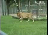 申博开户被困笼中13年 初尝青草味兴奋如猫咪