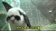 惊奇日本:什么奇葩都有的日本宠物店