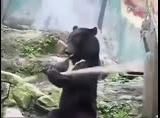 熊中美猴王!实拍黑熊耍木棍
