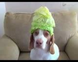一只生无可恋的狗狗