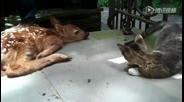 猫咪第一次见到梅花鹿