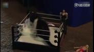 萌猫玩摔跤打擂台