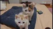 三只小猫神同步摆头卖萌无极限