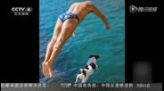 马耳他:宠物狗爱上跳水 与主人同步表演