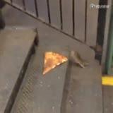 为了一口披萨 这只老鼠在地铁人潮里拼了