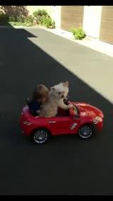 狗狗开车带宝宝上街玩耍 轻松掌控方向盘