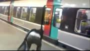 实拍女子阻挡地铁关门 被车内乘客一脚踹飞