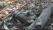 泰国一母猴死于车祸 小猴抱尸痛哭