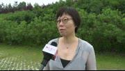 中国传媒大学教授张雅欣谈导师创作营活动