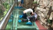 实拍两女子在玻璃栈道上为争男友互相扑倒厮打