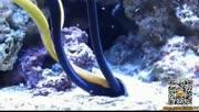 海底惊现彩带生物