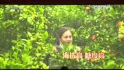 """百色西林县:原生态""""两高""""沙糖桔进京"""