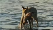 看各种动物如何捕鱼