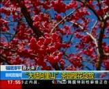 2月5日 17点新闻 春天来了 春风送暖   春花料峭