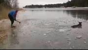 男子破冰救助被困驼鹿