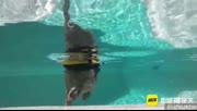 猫狗搭配冲浪不累!已成精的喵和汪你绝对没见过!
