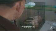 更上海   泪奔!日本遗孤在沪收养流浪动物几十年如一日,省吃俭用