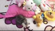 小奶猫喵叫福利...喵喵喵喵喵喵喵喵