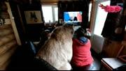 一只好好的大狗熊,愣是让俄罗斯大妈给养成了一条狗