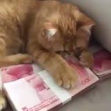 猫咪爱守着钱