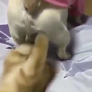 猫星人 你真的在扯蛋