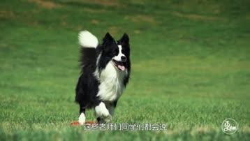 更成都 | 成都版《一条狗的使命》,爱狗人士必看