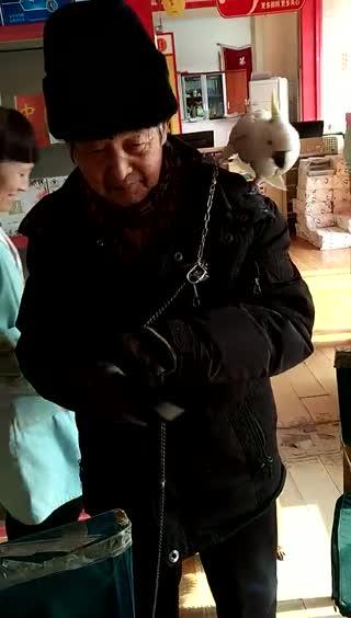 老人与鹦鹉故事