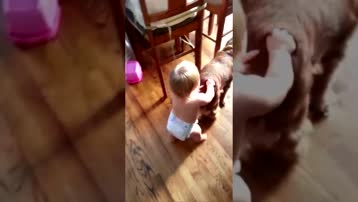 The Baby is the Leader of the Dog   FUNNY Dog and Baby Walking Together
