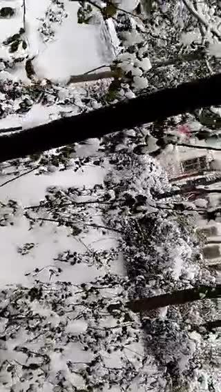冰雪中的绽放