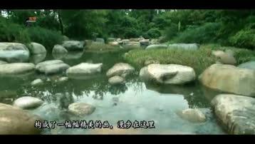 电视诗歌散文《所有相遇都是最好的时候》作者:郭卫红(河南)1