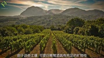 关于葡萄酒:意大利白葡萄酒