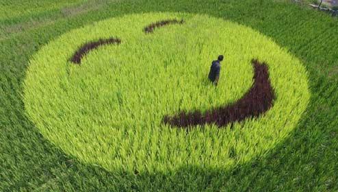"""80后农民有创意 打造""""会微笑的稻田"""""""