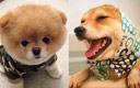你确定这是同一只狗?