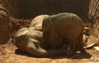 大象掉落深坑村民竭力救援