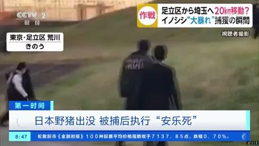 """[第一时间]日本野猪出没 被捕后执行""""安乐死"""""""